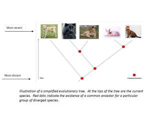 evolutionary tree